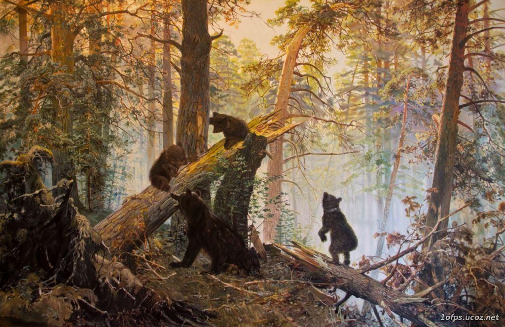 фокс обтягивающих утро в сосновом лесу картинки вариант, установить